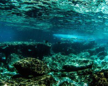 snorkeling, rlz, resort latitude zero, telo islands, Sumatra