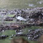 bird watching, leisure activity, telo islands, resort latitude zero, boutique resort