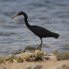 bird watching, leisure activity, telo islands, resort latitude zero, boutique resort