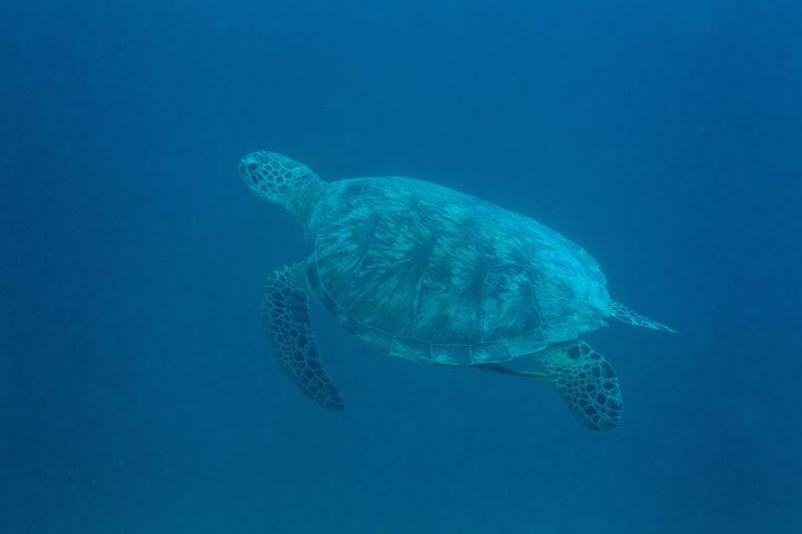 surfing, resort latitude zero, Sumatra, Indonesia, Telo Islands, holiday, resort